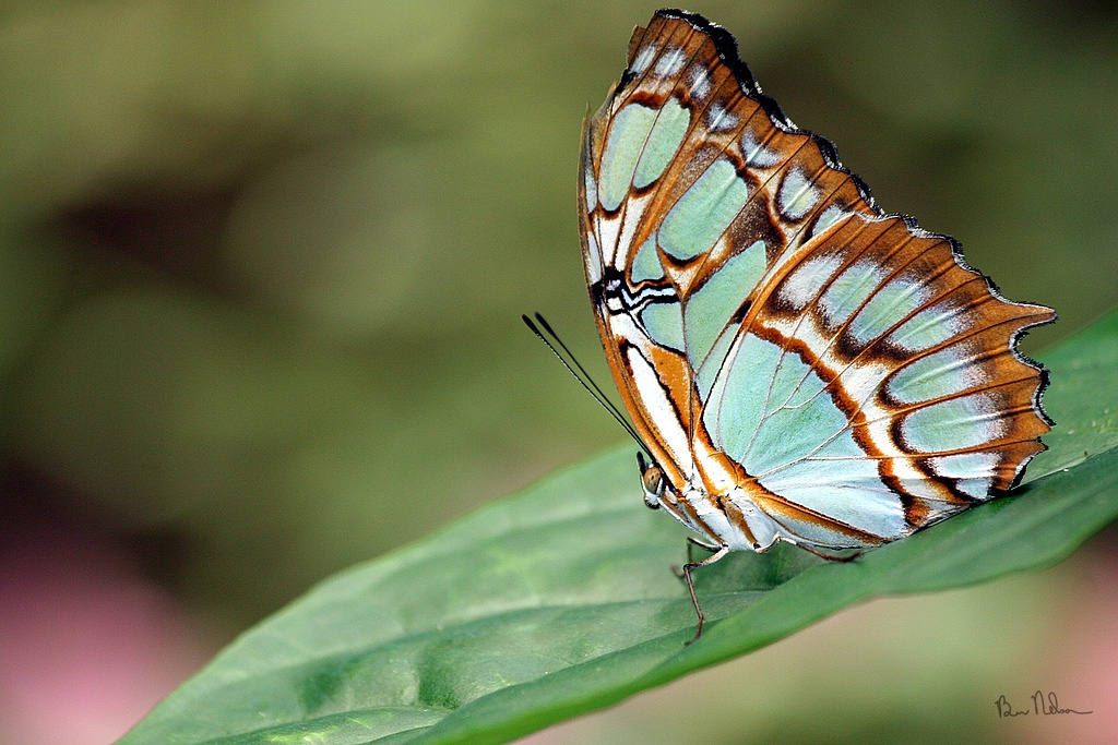 Butterflys-And-Moths